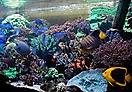 Riccardov akvarij