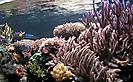 Richardov akvarij